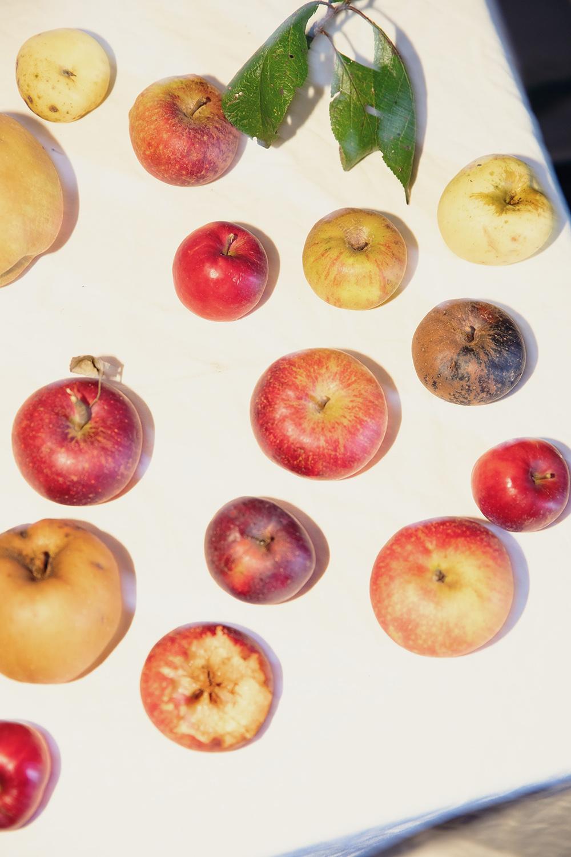 Amelie Niederbuchner An Apple a Day